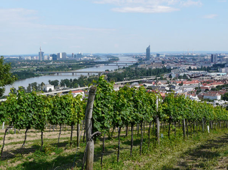 Kahlenberg grape fields; Vienna, Austria