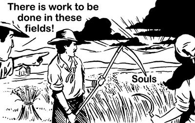 harvest fields flat