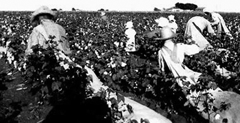 """Sharecroppers"" picking cotton"