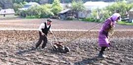 woman plowing